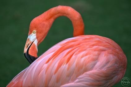 Nancy Cunningham flamingo