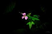 CJJ - Forest Flower