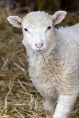 DonnaMarshallMary Had a Little Lamb0530.