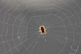 Doug Boyce - Itsy Bitsy Spider
