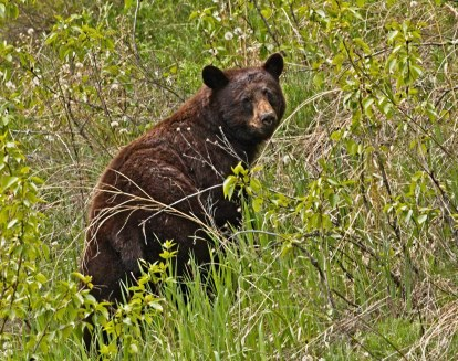 Nancy bear on the hill
