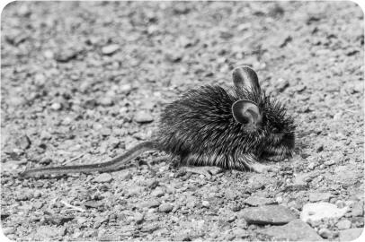 Gloria Melnychuk - Minnie Mouse