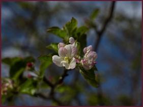 Kevin Haggkvist... Blossom Time