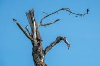 Three on a Tree © Larry Citra