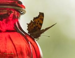 Diane Hopp - Butterfly on Hummingbird Feeder - original