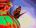 Diane Hopp - Butterfly on Hummingbird Feeder - Vivid