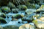 Monet Visits Eakin Creek © Larry Citra
