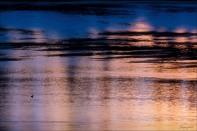 Sharon Jensen - © - Lone Duck