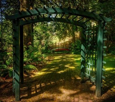 Forest Garden - CJJ