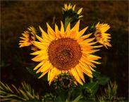 Gloria Melnychuk - Keep on the Sunny Side, Always on the sunny side, Keep on the sunny side of life . . .