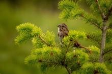 Small Bird - Kathy Wright