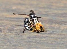 Wasp - Maureen Nelson