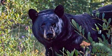 Nancy Cunningham Bear