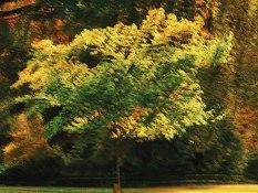 CJJ-Fall Colours Multiple Exposures