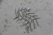 Doug Boyce - Designer Sand