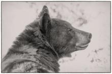 Diane Hopp - My Furry Friend 2