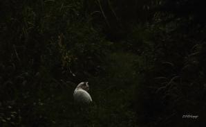 Diane Hopp - White Cat Hunting-1