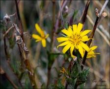Gary Hardaker- Wild Flower- Farwell Canyon