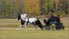 Stepping Out © Gloria Melnychuk - Carriage Driving Sep 2021
