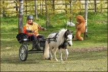 Carriage Driving - Huber Farm Sep 2021
