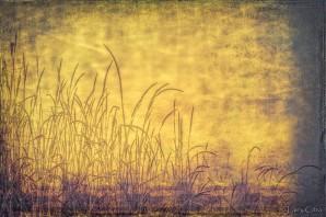 Larry Citra © Grass & Grunge